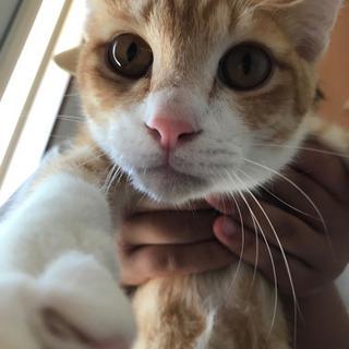 急募 どなたかかわいい猫ちゃんもらってください