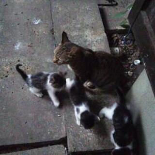 のら猫さんの2匹の仔猫の里親さん募集致します。1匹は素敵…