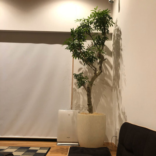 【オシャレ★美品★大型】鉢カバー 10号鉢用 インテリア 観葉植...