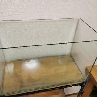 テトラ オールグラス 60cm水槽 60×30×36