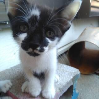 【豊橋市】人懐っこい子猫の里親様募集 10月7日募集中