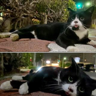 外で生きる初老?おじさん猫の里親さんを募集しております。