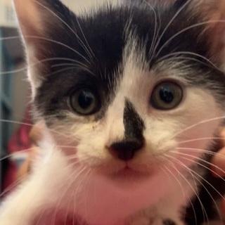 1ヶ月半くらいの子猫ちゃん