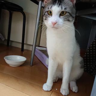 スリムで上品な猫
