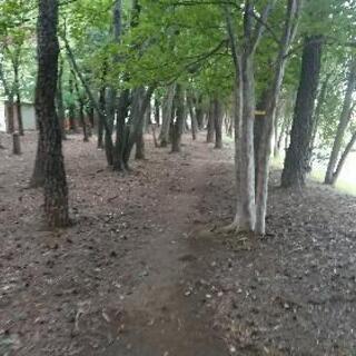 上尾運動公園でジョギングしませんか?
