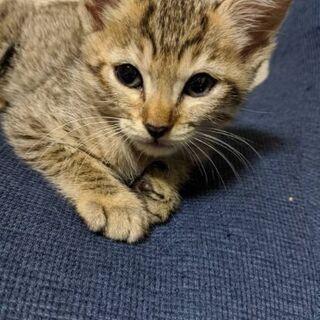 生後1ヵ月の子猫の里親を探しています 3 - 猫