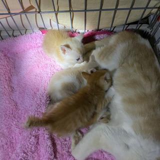 子猫 4匹
