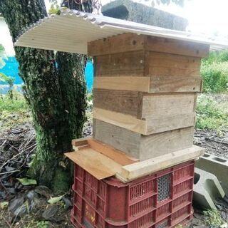 にほんミツバチ(巣箱+ミツバチ)をお譲りします。