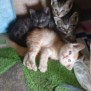 子猫たちの里親を探しています。子猫(2ヶ月)