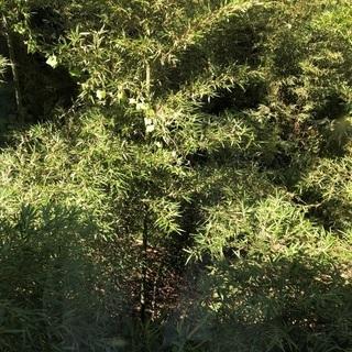 雑草 竹等の伐採から処分まで