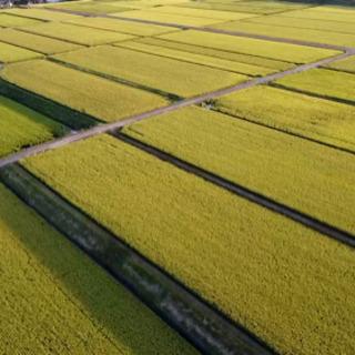 大分県産ひのひかり 令和3年収穫新米