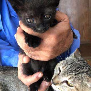 可愛い猫の里親募集 − 沖縄県