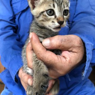 可愛い猫の里親募集 - 猫
