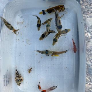 バラ売り可能 海水魚