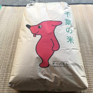 千葉県木更津産 フサオトメ 30kg