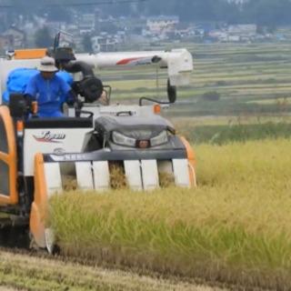 コンバインオペレーターか籾運びトラック運転手 1万円