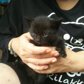 多数の方からの問い合わせがありまして一旦受付を中断致しますm(__)m5匹の子猫 里親募集 - 松戸市