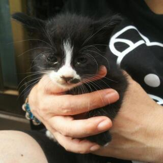 多数の方からの問い合わせがありまして一旦受付を中断致しますm(__)m5匹の子猫 里親募集 - 猫
