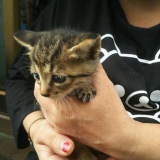 多数の方からの問い合わせがありまして一旦受付を中断致しますm(__)m5匹の子猫 里親募集 − 千葉県