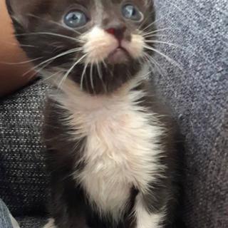 生後4週間ぐらいの可愛い子猫ちゃんの里親募集 最後まで投稿…