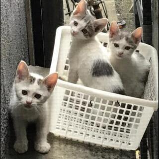 2ヶ月のオス猫 まだ募集中!