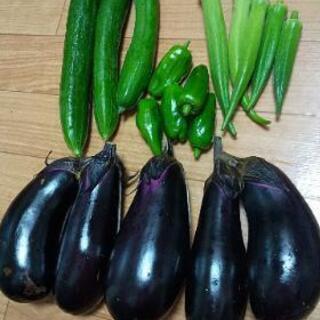 台風前お野菜4点盛り