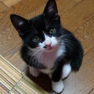 二ヶ月の黒白ちゃん、生後10日位からミルクで育てたのでとて…