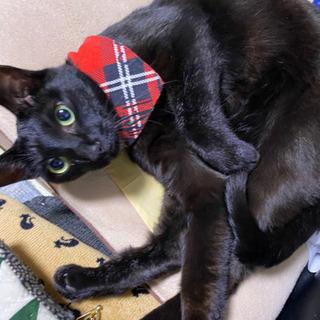 ルナちゃん(仮) 1歳の黒猫 女の子 − 北海道