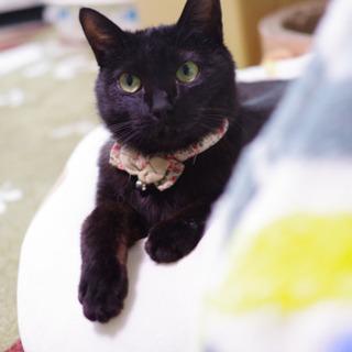 ルナちゃん(仮) 1歳の黒猫 女の子 - 河東郡