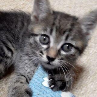 生後1ヶ月半くらいの子猫