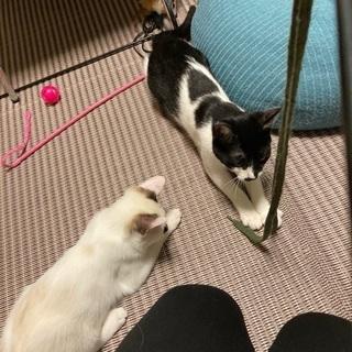 切り離せない姉妹子猫