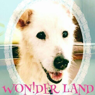 動物愛護活動家ワンダーランドさんの紹介です