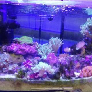 サンゴ水槽一式