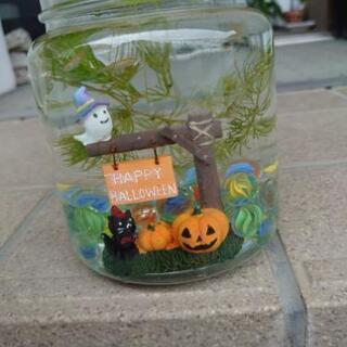再販 Halloweenバージョン水槽 稚魚5匹メダカ入り