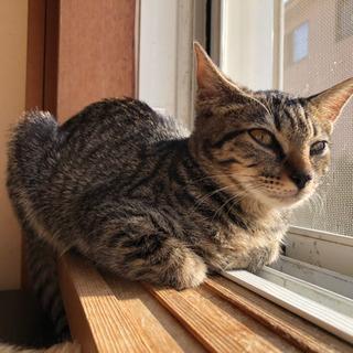 キジ猫のお嬢さん、お風呂も好きですよ!