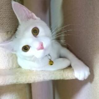保護猫の里親募集 − 山口県