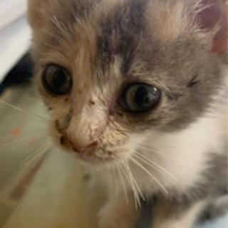 一旦募集を止めます!生後4ヶ月前後の子猫(女の子)