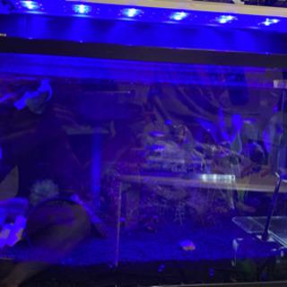 アクアリウム LEDライト VOLADOR - さいたま市