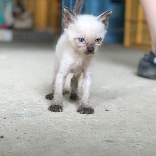 令和2年7月豪雨に保護した猫ちゃんが赤ちゃんを産みました。