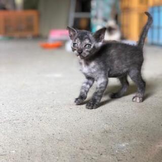令和2年7月豪雨に保護した猫ちゃんが赤ちゃんを産みました!