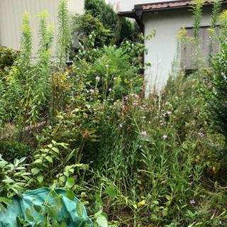 草刈り、剪定、伐採、除草剤¥6.000〜 - 便利屋