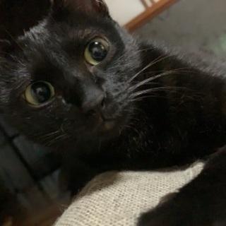 黒猫はお好きですか?