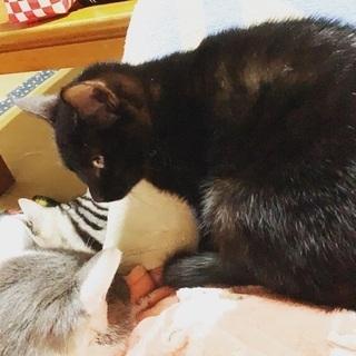 黒猫はお好きですか? − 宮崎県