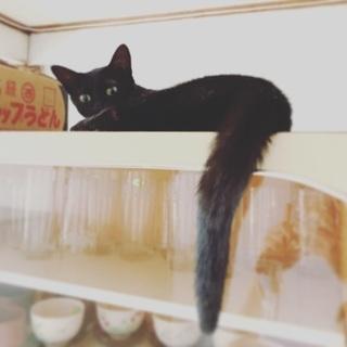 黒猫はお好きですか? - 猫