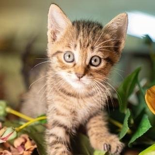 あかちゃん猫は全て決まり、お母さん猫のみの募集になります。…