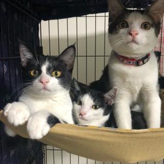 生後約4ヶ月半のスリゴロな子猫の里親募集です!