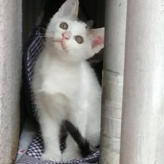 2ヶ月のオス猫 まだ募集中! - 猫