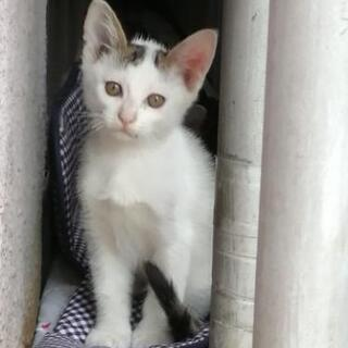 2ヶ月のオス猫 まだ募集中! − 岐阜県