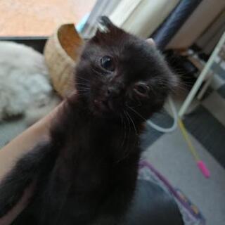 生後2ヶ月黒ねこくん − 静岡県