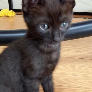 【再募集】黒猫3匹の子猫の家族になってください